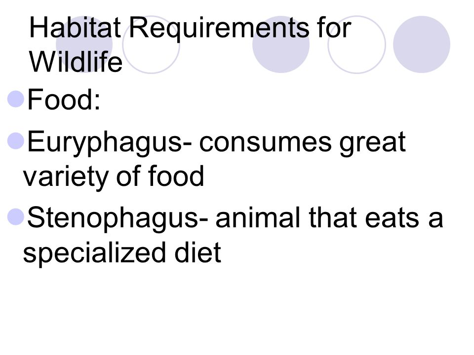 Habitat Requirements for Wildlife Food: Euryphagus- consumes great variety of food Stenophagus- animal that eats a specialized diet