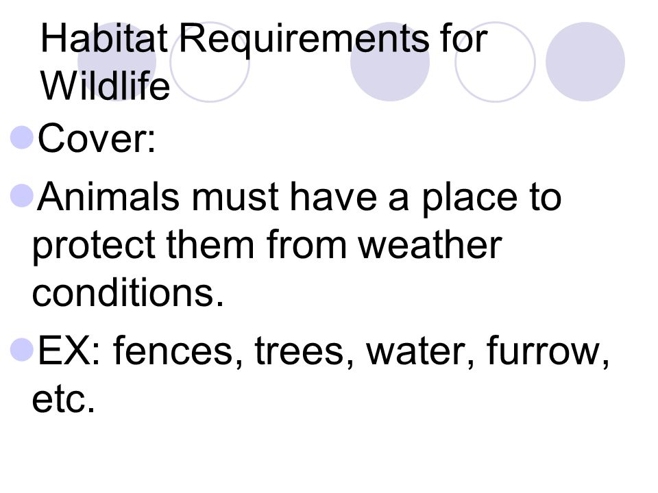 Habitat Requirements for Wildlife Cover: Animals must have a place to protect them from weather conditions.