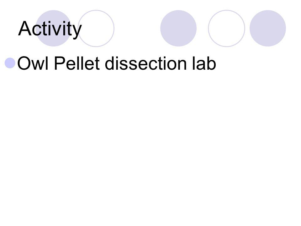 Activity Owl Pellet dissection lab