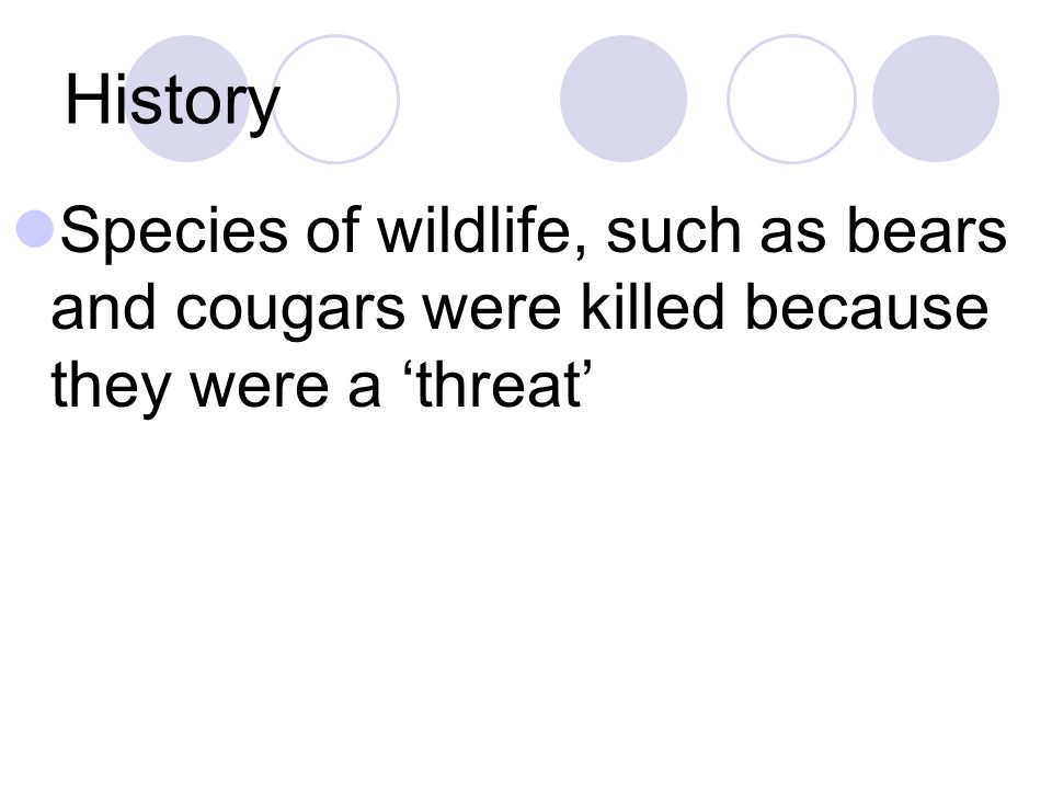History Species of wildlife, such as bears and cougars were killed because they were a 'threat'