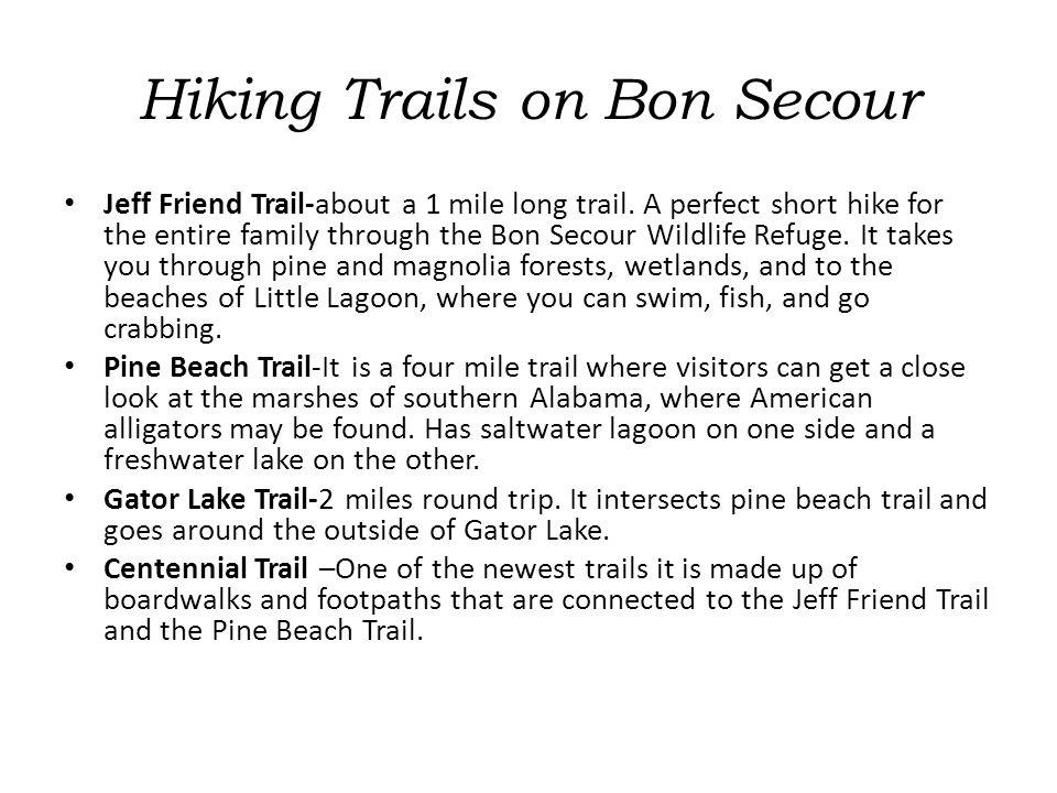 Hiking Trails on Bon Secour Jeff Friend Trail-about a 1 mile long trail.