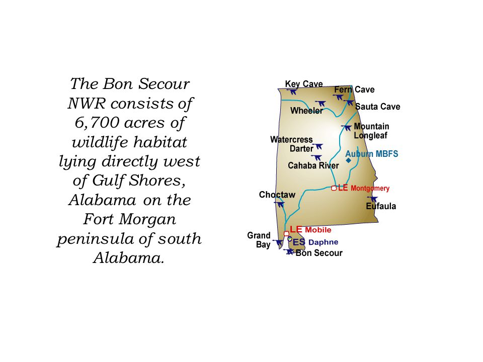 Public Use of Bon Secour Hiking Trails Bird and wildlife observation Fresh and Saltwater Fishing Volunteer Programs