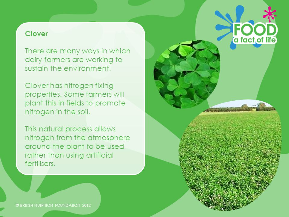 © BRITISH NUTRITION FOUNDATION 2012 Aiming to improve The dairy industry is still working towards reducing the negative environmental impact even further through the Milk Roadmap.
