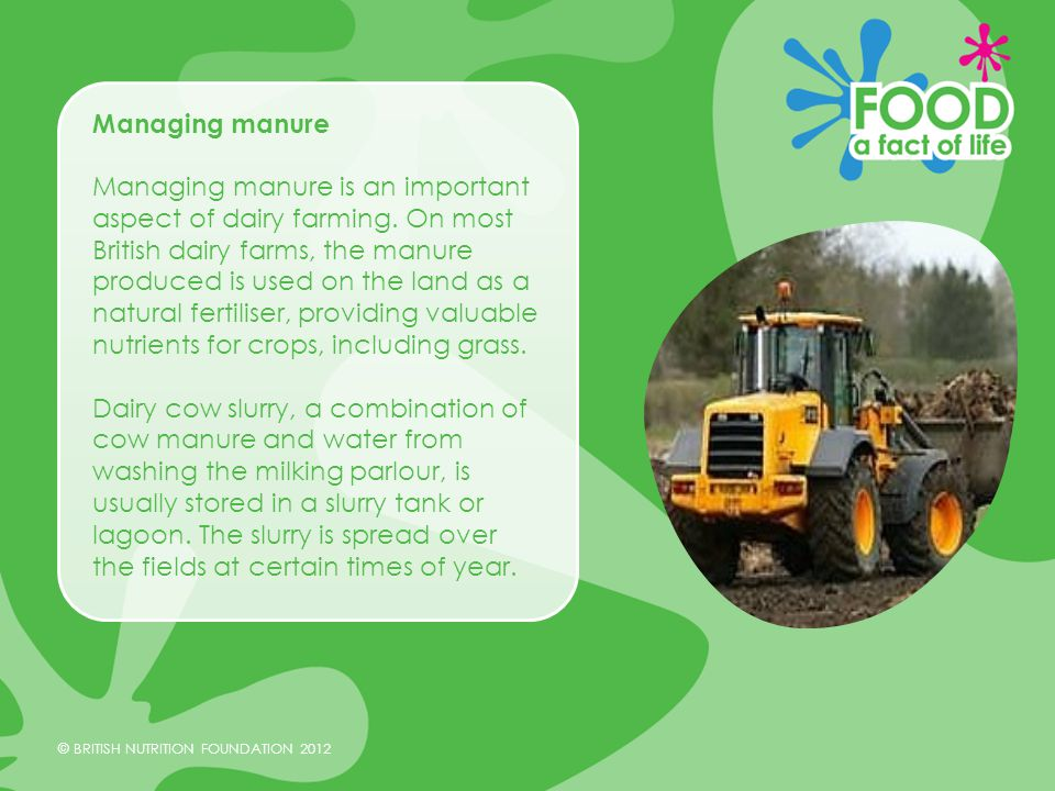 © BRITISH NUTRITION FOUNDATION 2012 Summary As part of a natural living system, dairy cow farming can have a impact on the environment due to methane production.