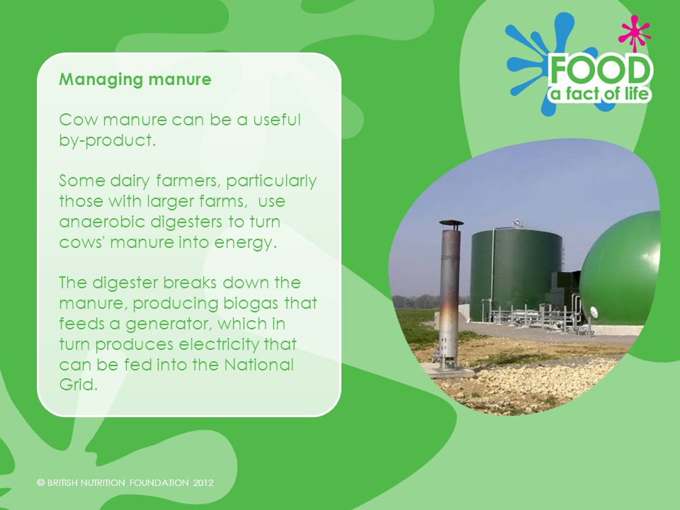 © BRITISH NUTRITION FOUNDATION 2012 Managing manure Cow manure can be a useful by-product.