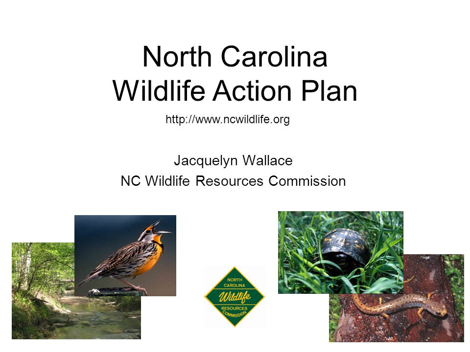 North Carolina Wildlife Action Plan http://www.ncwildlife.org Jacquelyn Wallace NC Wildlife Resources Commission