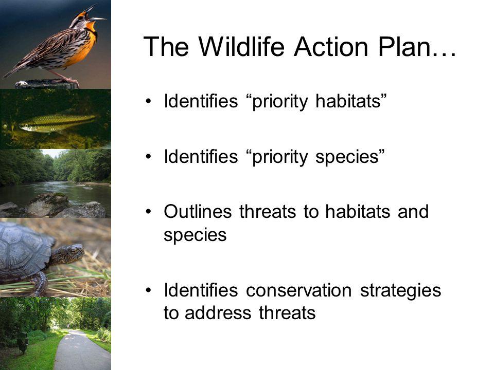 The Wildlife Action Plan… Identifies priority habitats Identifies priority species Outlines threats to habitats and species Identifies conservation strategies to address threats