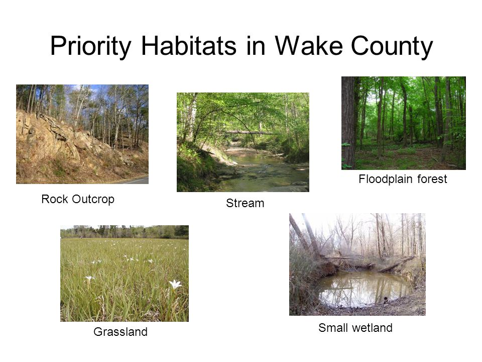 Priority Habitats in Wake County Rock Outcrop Floodplain forest Stream Grassland Small wetland