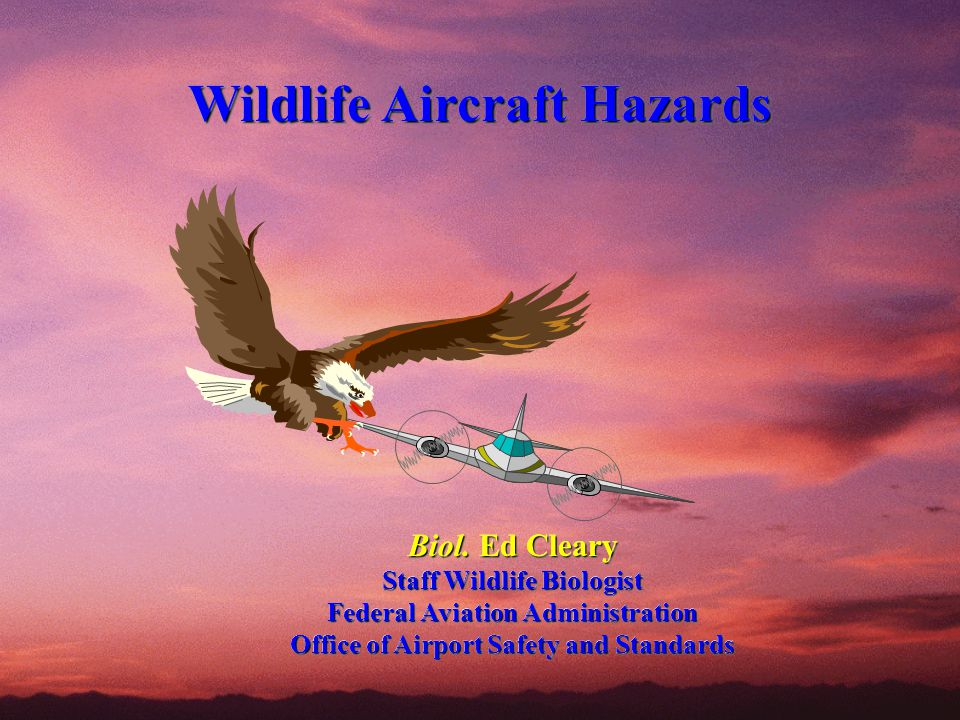 Wildlife Aircraft Hazards Wildlife Aircraft Hazards Biol. Ed Cleary Staff Wildlife Biologist Federal Aviation Administration Office of Airport Safety