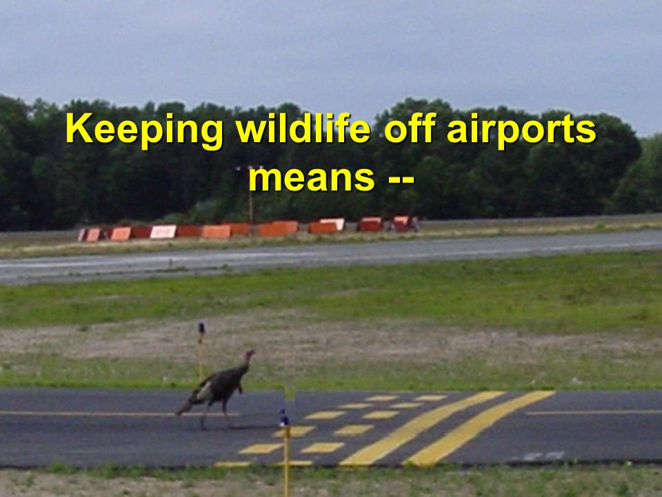 17 Keeping wildlife off airports means --