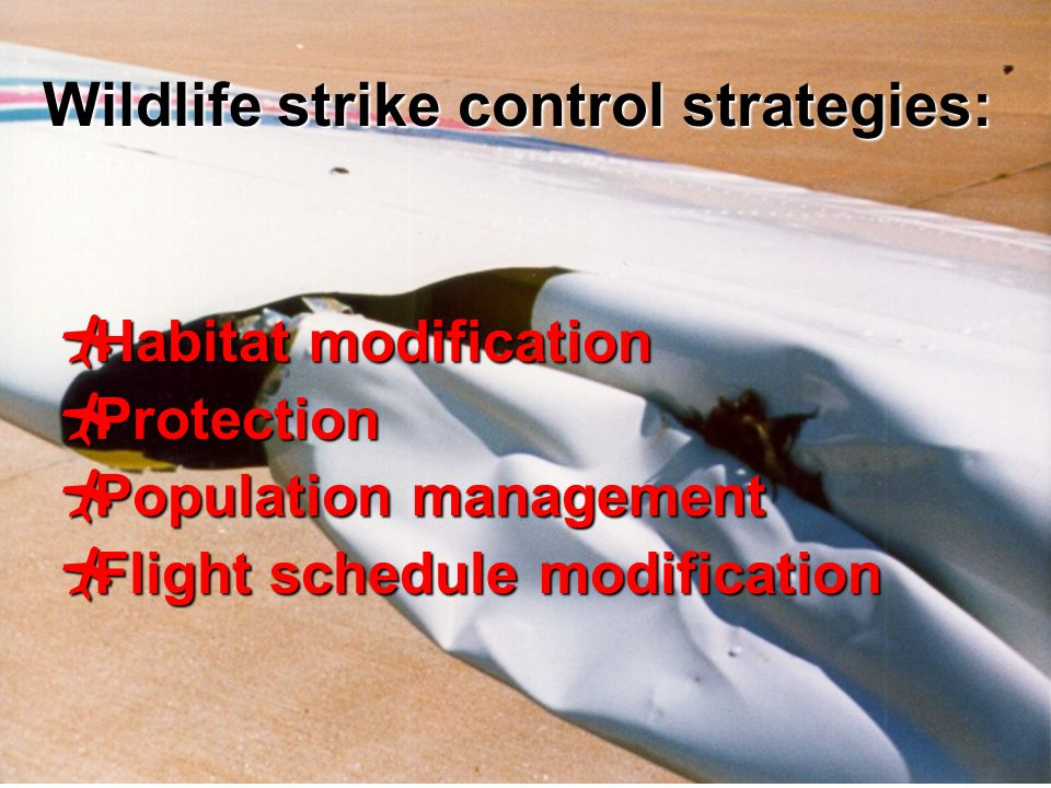 7  Habitat modification  Protection  Population management  Flight schedule modification Wildlife strike control strategies: