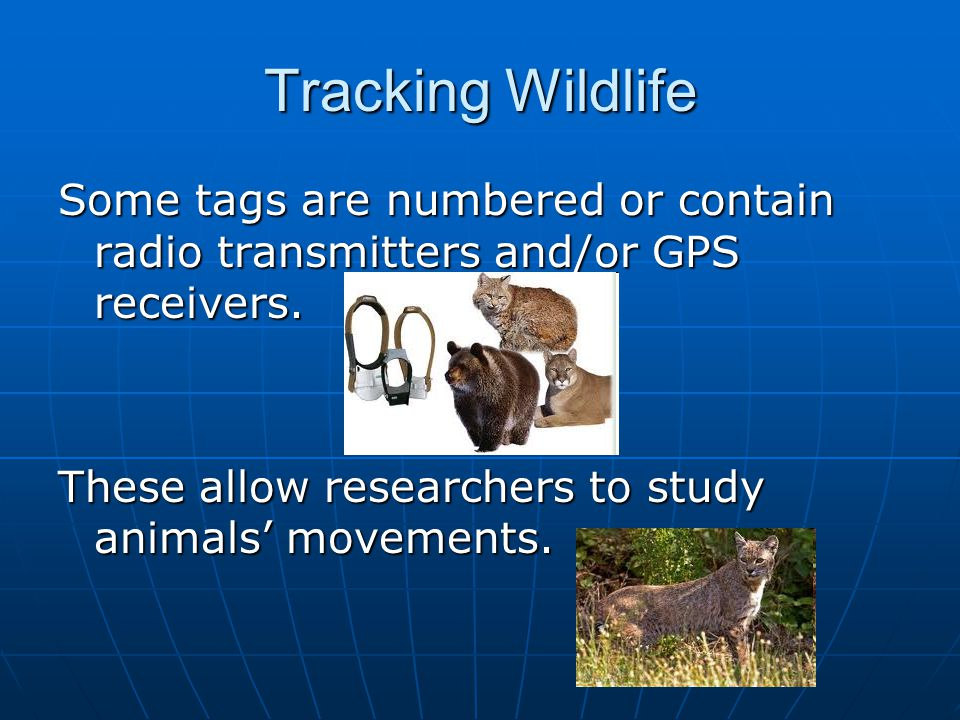 Tracking Wildlife Some tags are numbered or contain radio transmitters and/or GPS receivers.