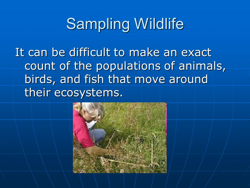 Sampling Wildlife It can be difficult to make an exact count of the populations of animals, birds, and fish that move around their ecosystems.