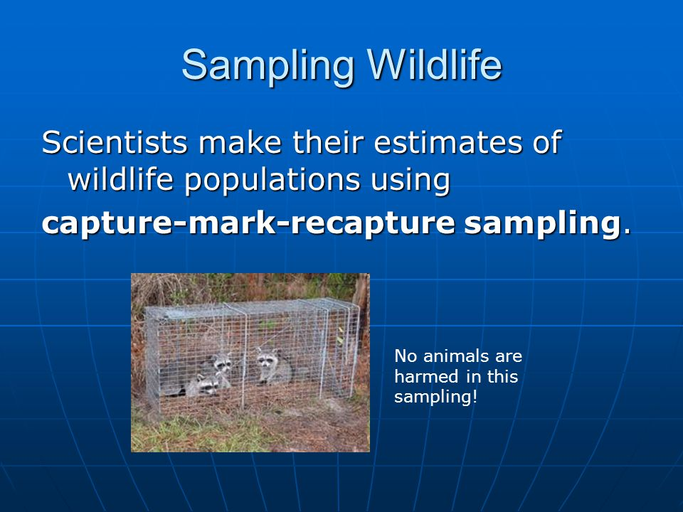 Sampling Wildlife First, a sample is captured and marked.