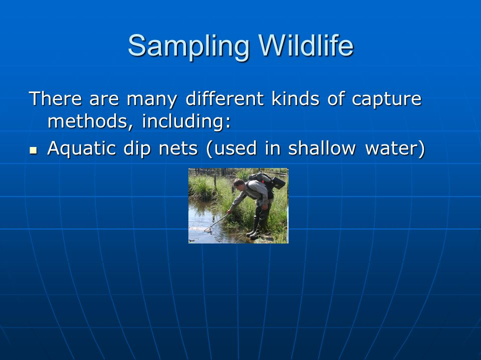 Sampling Wildlife There are many different kinds of capture methods, including: Aquatic dip nets (used in shallow water) Aquatic dip nets (used in shallow water) Mist nets (used for birds and bats) Mist nets (used for birds and bats)