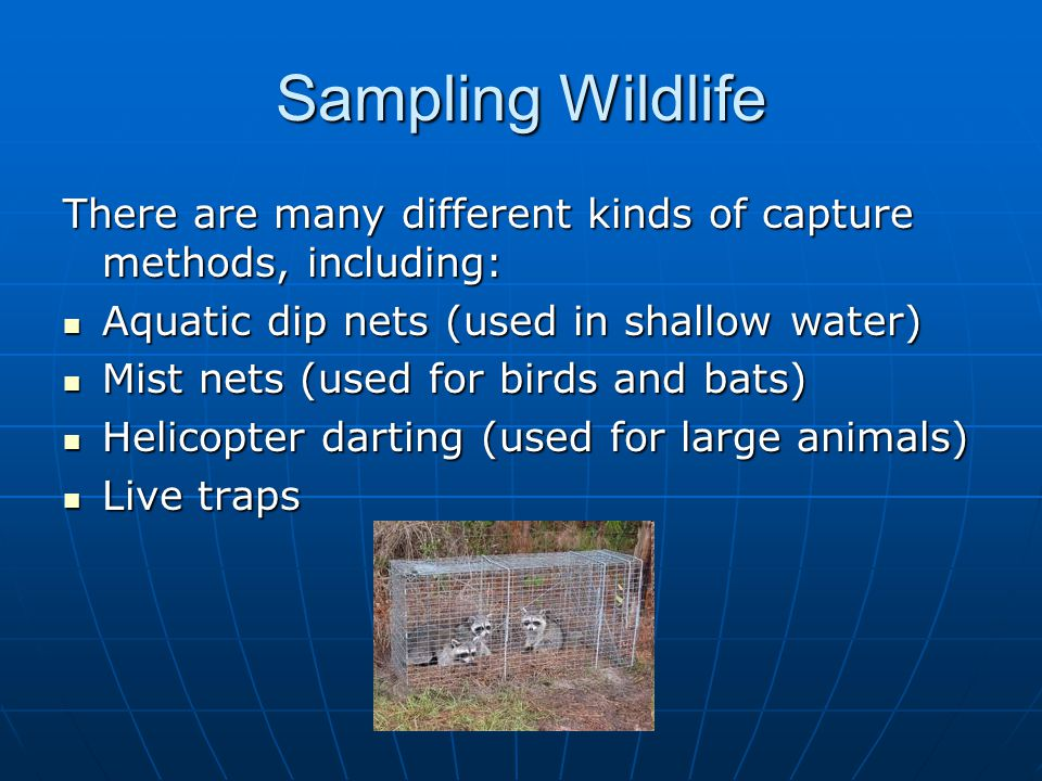 Sampling Wildlife There are many different kinds of capture methods, including: Aquatic dip nets (used in shallow water) Aquatic dip nets (used in shallow water) Mist nets (used for birds and bats) Mist nets (used for birds and bats) Helicopter darting (used for large animals) Helicopter darting (used for large animals) Live traps Live traps