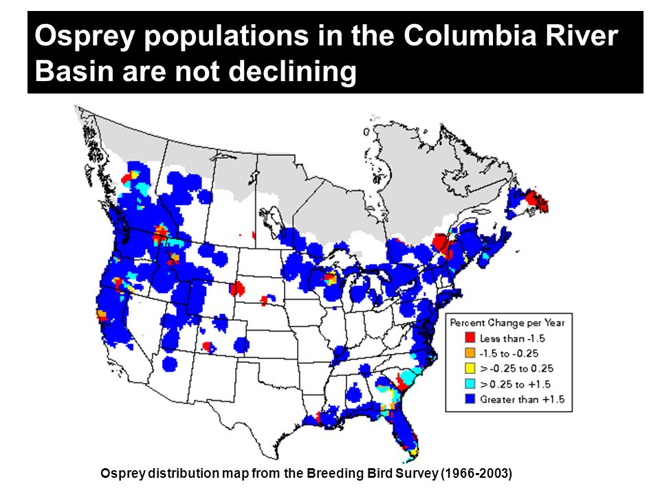 Osprey populations in the Columbia River Basin are not declining Osprey distribution map from the Breeding Bird Survey (1966-2003)