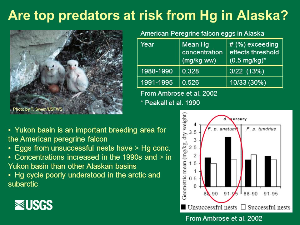 Are top predators at risk from Hg in Alaska. From Ambrose et al.