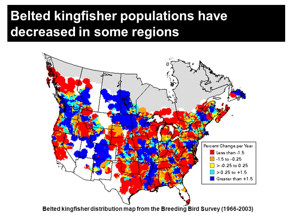 Belted kingfisher populations have decreased in some regions Belted kingfisher distribution map from the Breeding Bird Survey (1966-2003)