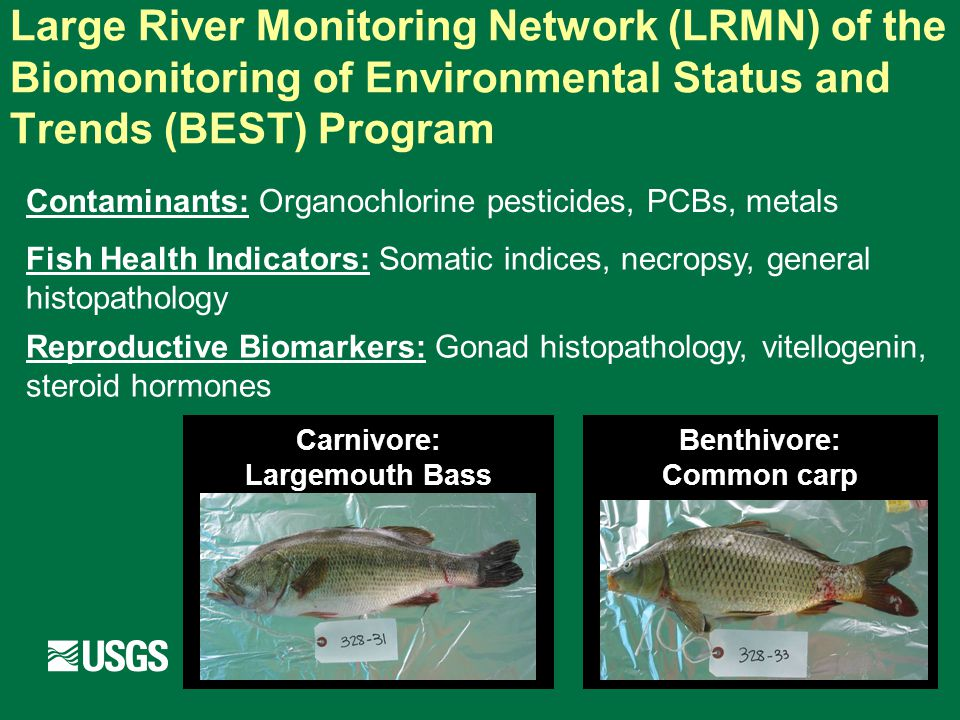 LRMN Dataset 1995 1997 2003 2002 Basins: 5 Sites: 97 Individual fish: 3040 Whole body composite samples: 357