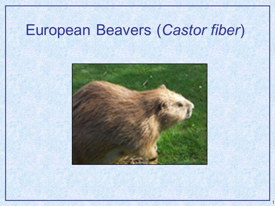 1 European Beavers (Castor fiber)