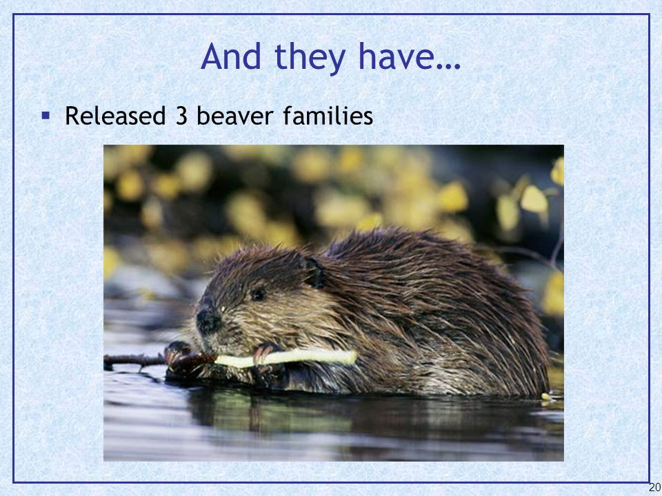 And they have…  Released 3 beaver families 20