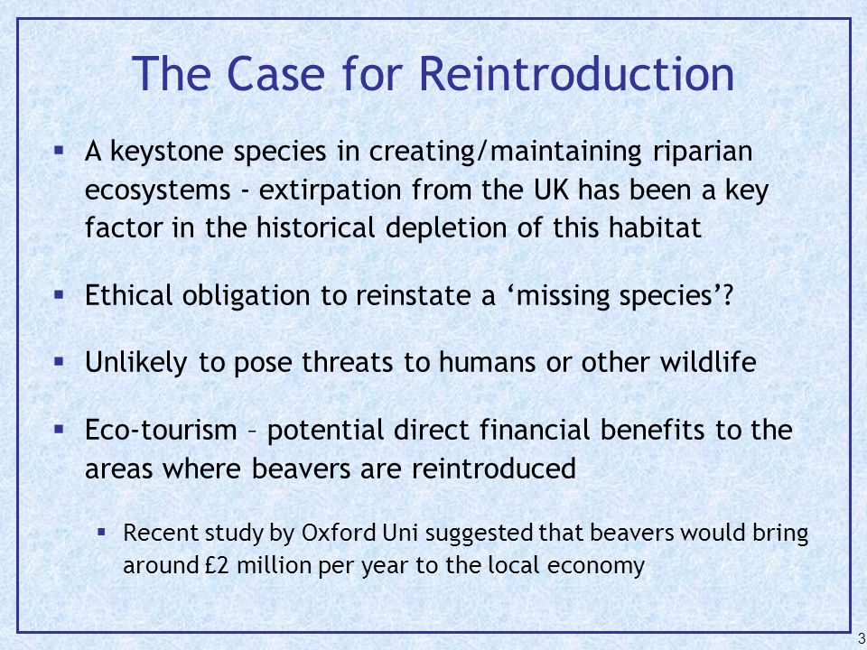 The Case for Reintroduction  A keystone species in creating/maintaining riparian ecosystems - extirpation from the UK has been a key factor in the historical depletion of this habitat  Ethical obligation to reinstate a 'missing species'.