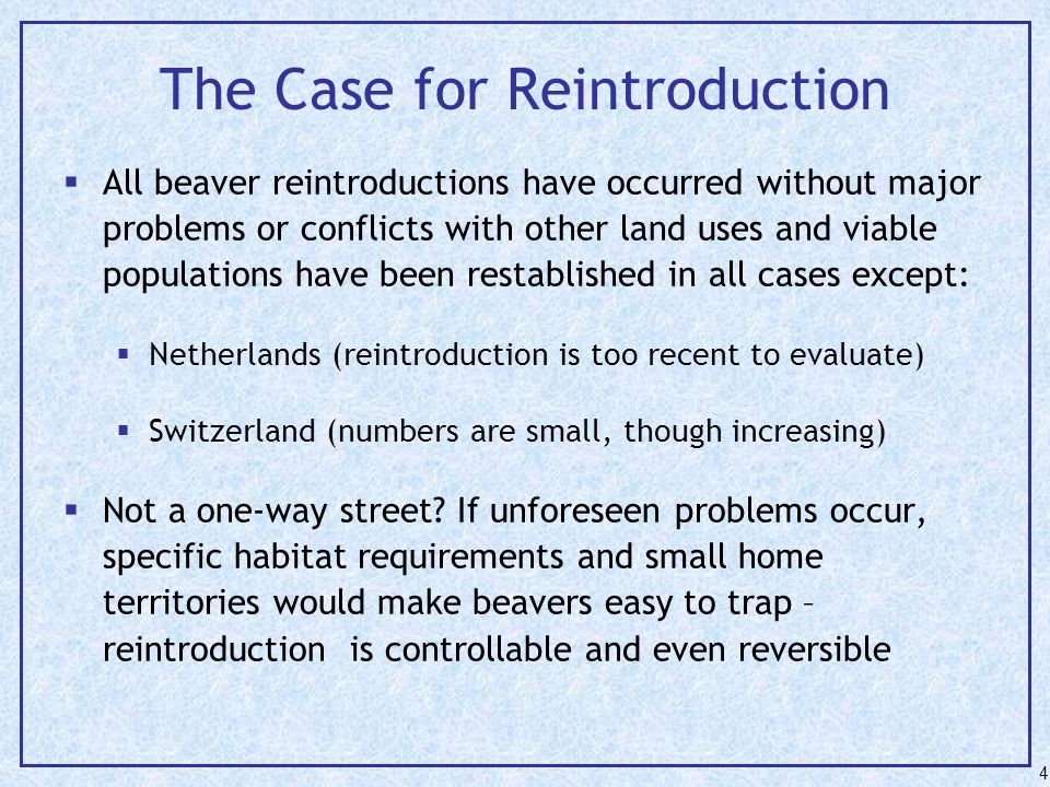 The Case for Reintroduction  All beaver reintroductions have occurred without major problems or conflicts with other land uses and viable populations have been restablished in all cases except:  Netherlands (reintroduction is too recent to evaluate)  Switzerland (numbers are small, though increasing)  Not a one-way street.