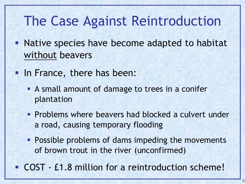 The Case Against Reintroduction  Native species have become adapted to habitat without beavers  In France, there has been:  A small amount of damage to trees in a conifer plantation  Problems where beavers had blocked a culvert under a road, causing temporary flooding  Possible problems of dams impeding the movements of brown trout in the river (unconfirmed)  COST - £1.8 million for a reintroduction scheme .