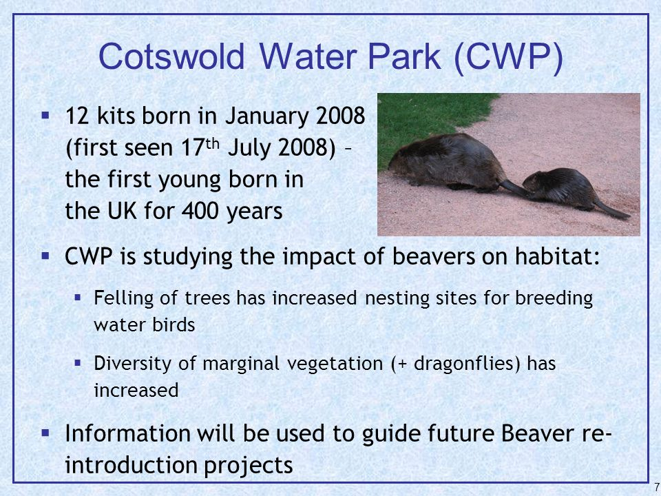 7 Cotswold Water Park (CWP)  12 kits born in January 2008 (first seen 17 th July 2008) – the first young born in the UK for 400 years  CWP is studying the impact of beavers on habitat:  Felling of trees has increased nesting sites for breeding water birds  Diversity of marginal vegetation (+ dragonflies) has increased  Information will be used to guide future Beaver re- introduction projects