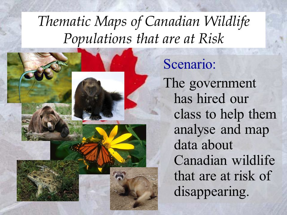 Thematic Maps of Canadian Wildlife Populations that are at Risk First Step: Decide which group of wildlife (ex.