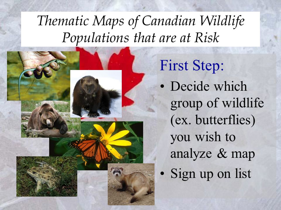 Thematic Maps of Canadian Wildlife Populations that are at Risk Eighth Step: Check your map requirement list & rubric to make sure you have everything on your map.
