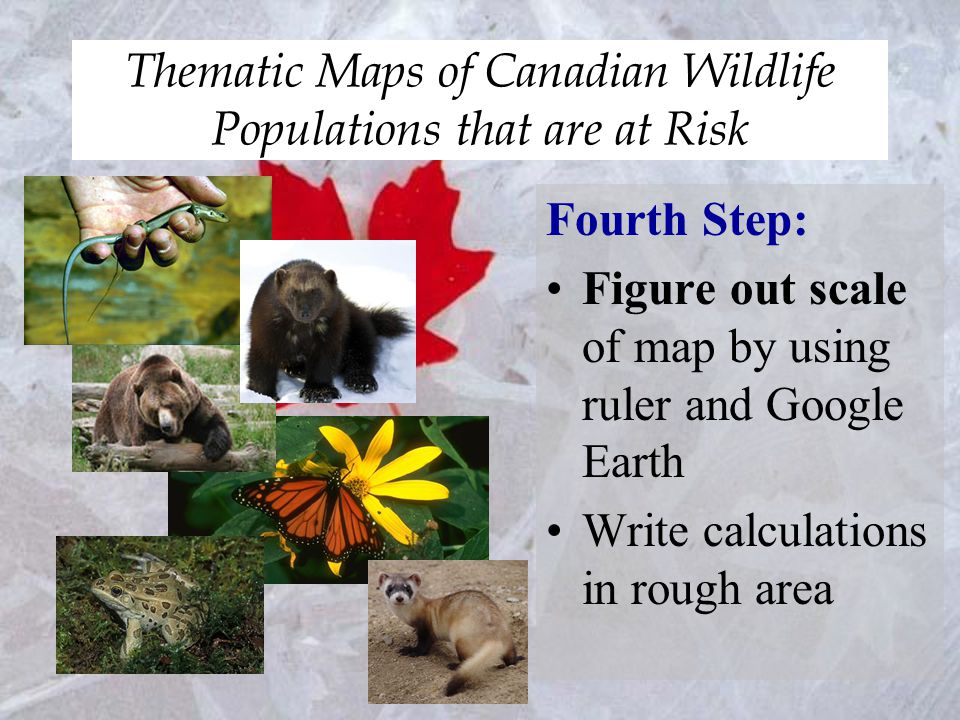 Thematic Maps of Canadian Wildlife Populations that are at Risk Fourth Step: Figure out scale of map by using ruler and Google Earth Write calculations in rough area