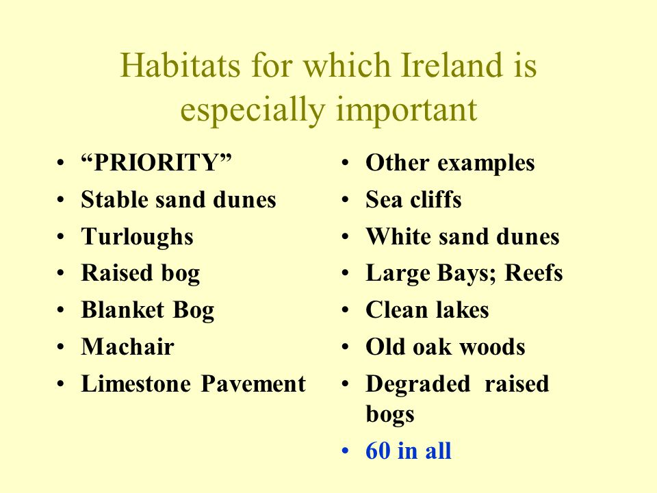 Habitats for which Ireland is especially important PRIORITY Stable sand dunes Turloughs Raised bog Blanket Bog Machair Limestone Pavement Other examples Sea cliffs White sand dunes Large Bays; Reefs Clean lakes Old oak woods Degraded raised bogs 60 in all