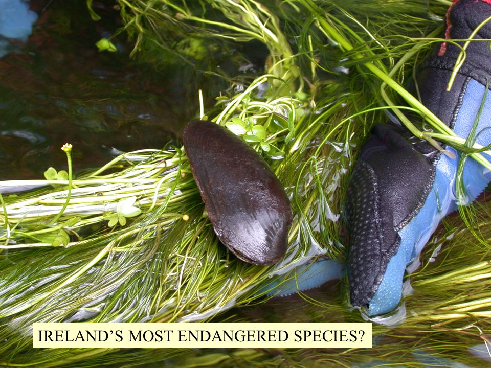 IRELAND'S MOST ENDANGERED SPECIES?