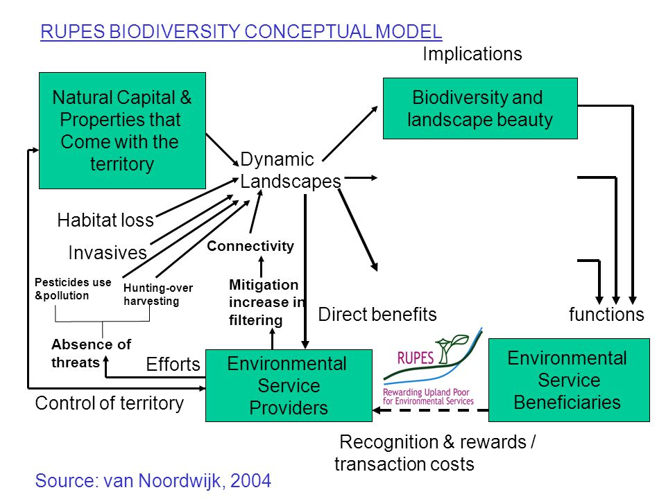 Biodiversity and landscape beauty Environmental Service Beneficiaries Environmental Service Providers Natural Capital & Properties that Come with the territory Dynamic Landscapes Implications functionsDirect benefits Control of territory Efforts Recognition & rewards / transaction costs RUPES BIODIVERSITY CONCEPTUAL MODEL Source: van Noordwijk, 2004 Absence of threats Mitigation increase in filtering Connectivity Habitat loss Invasives Pesticides use &pollution Hunting-over harvesting