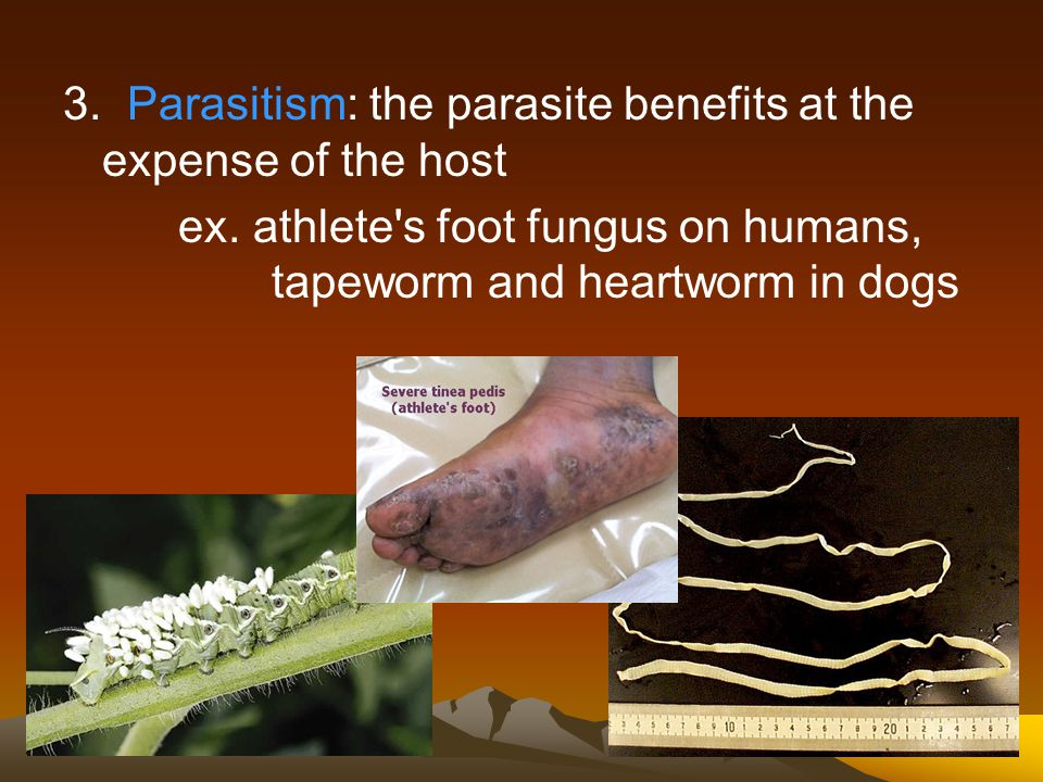 2. Mutualism: both organisms benefit from the association ex. nitrogen-fixing bacteria on legume nodules, certain protozoa within termites (also rumin