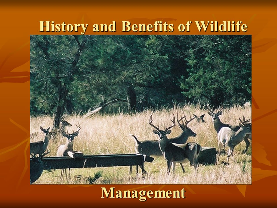 US Fish and Wildlife Service US Department of Agriculture National Parks Service Bureau of Land Management Environmental Protection Agency Natural Resource Conservation Service Federal Agencies