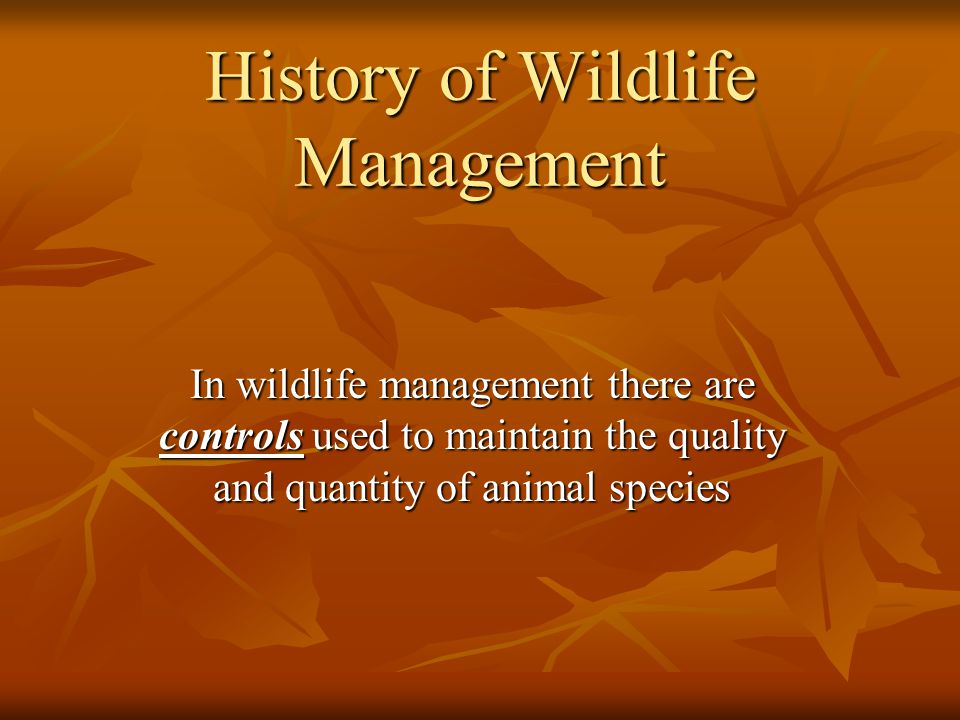 History of Wildlife Management In wildlife management there are controls used to maintain the quality and quantity of animal species