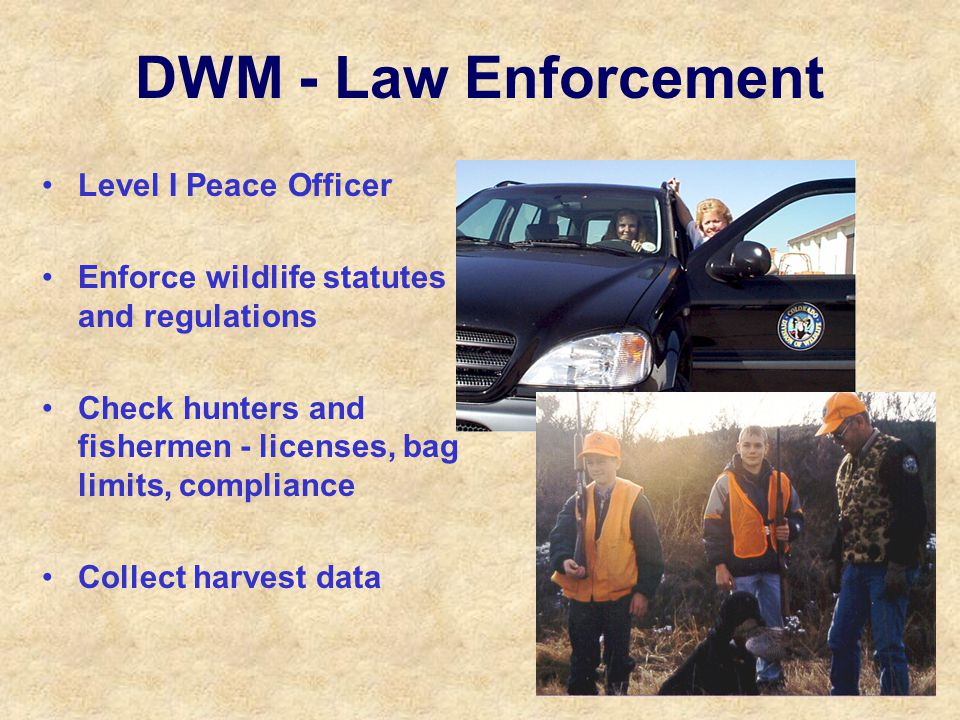 DWM - Law Enforcement Level I Peace Officer Enforce wildlife statutes and regulations Check hunters and fishermen - licenses, bag limits, compliance Collect harvest data