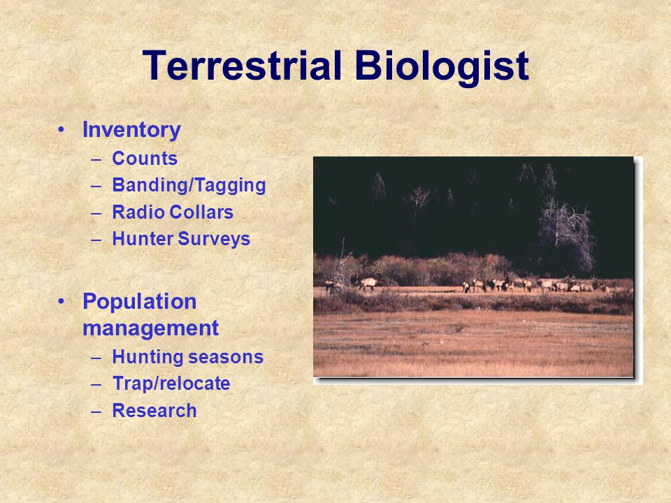 Terrestrial Biologist Inventory –Counts –Banding/Tagging –Radio Collars –Hunter Surveys Population management –Hunting seasons –Trap/relocate –Research