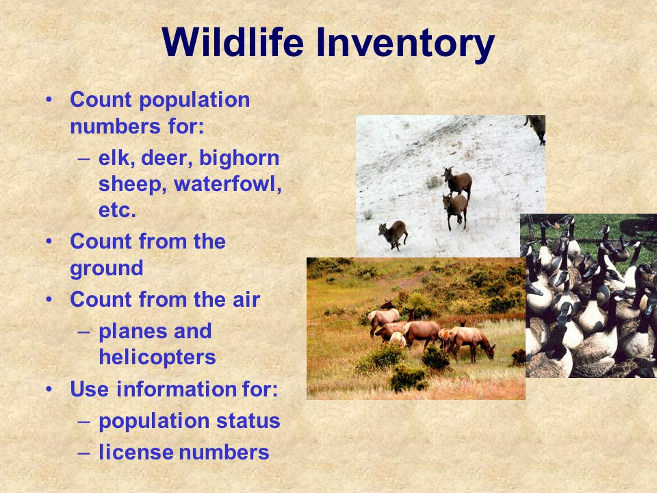 Wildlife Inventory Count population numbers for: –elk, deer, bighorn sheep, waterfowl, etc. Count from the ground Count from the air –planes and helic