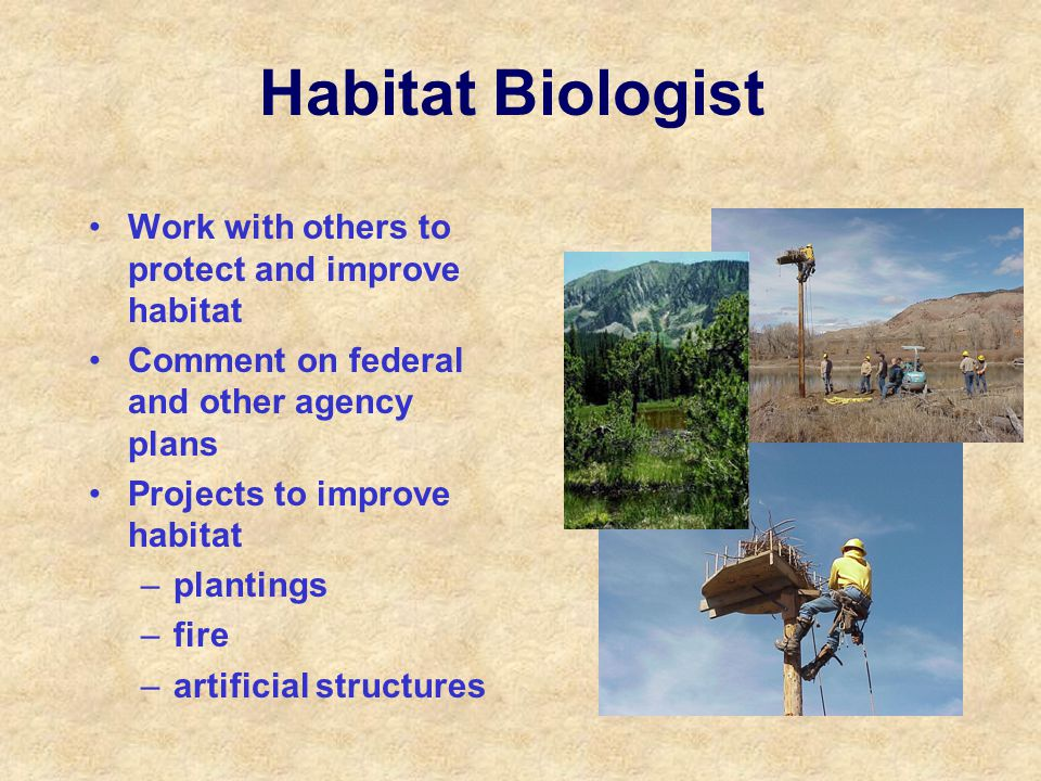Habitat Biologist Work with others to protect and improve habitat Comment on federal and other agency plans Projects to improve habitat –plantings –fire –artificial structures