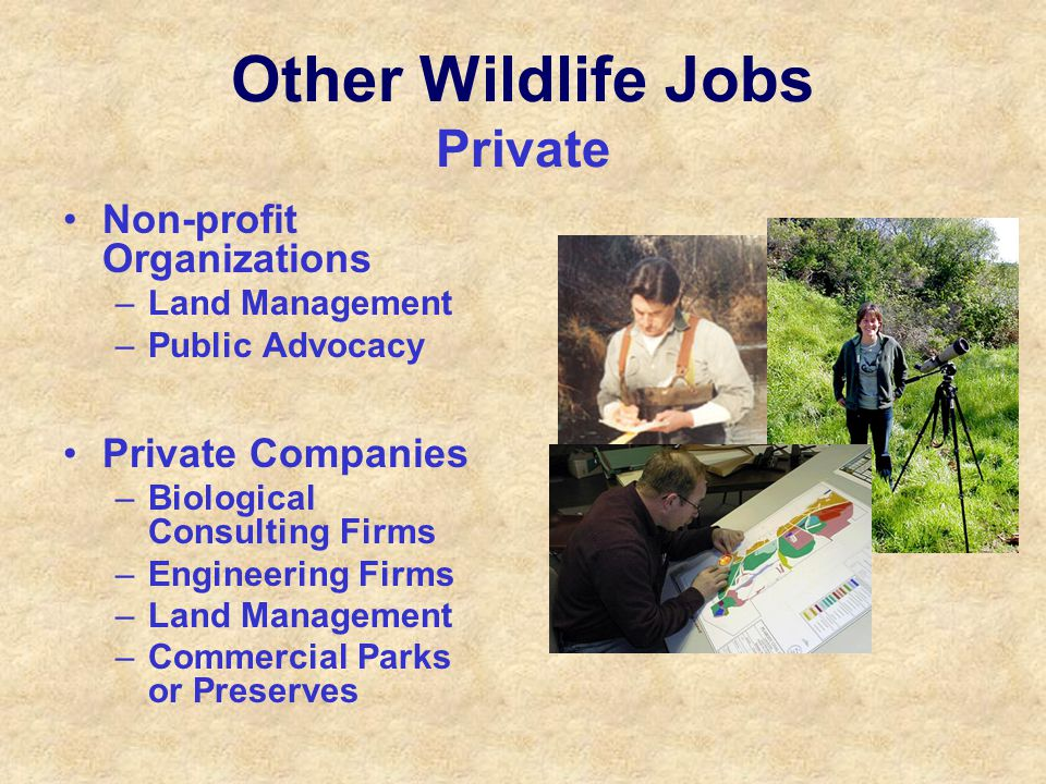 Other Wildlife Jobs Private Non-profit Organizations –Land Management –Public Advocacy Private Companies –Biological Consulting Firms –Engineering Firms –Land Management –Commercial Parks or Preserves
