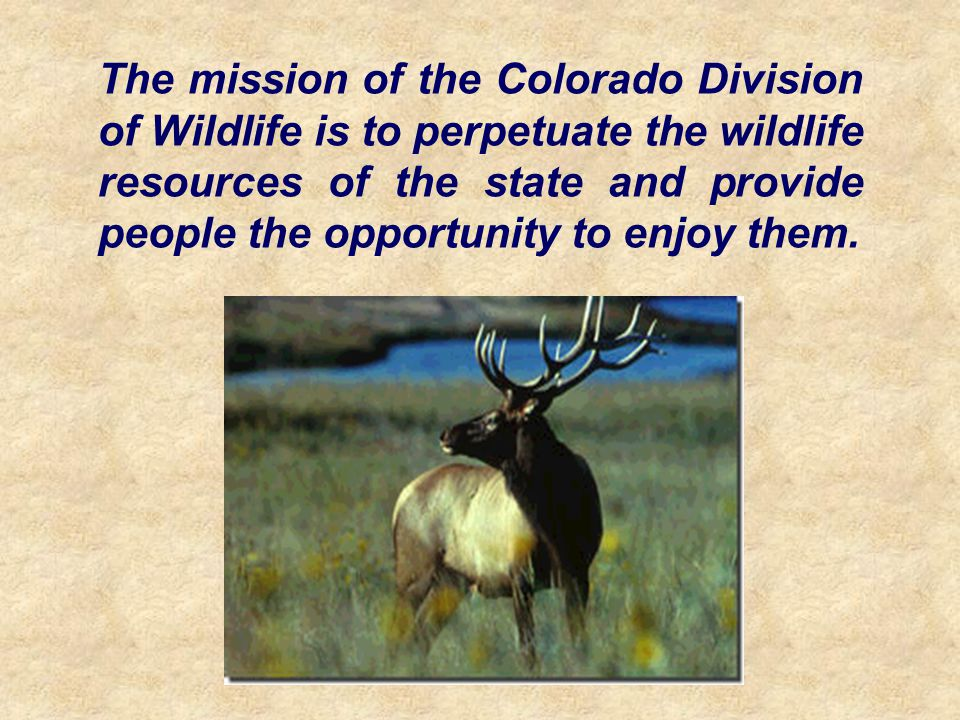 The mission of the Colorado Division of Wildlife is to perpetuate the wildlife resources of the state and provide people the opportunity to enjoy them