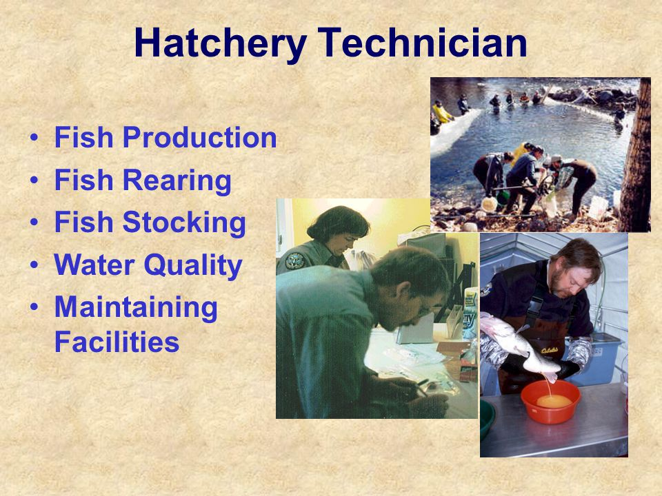 Hatchery Technician Fish Production Fish Rearing Fish Stocking Water Quality Maintaining Facilities