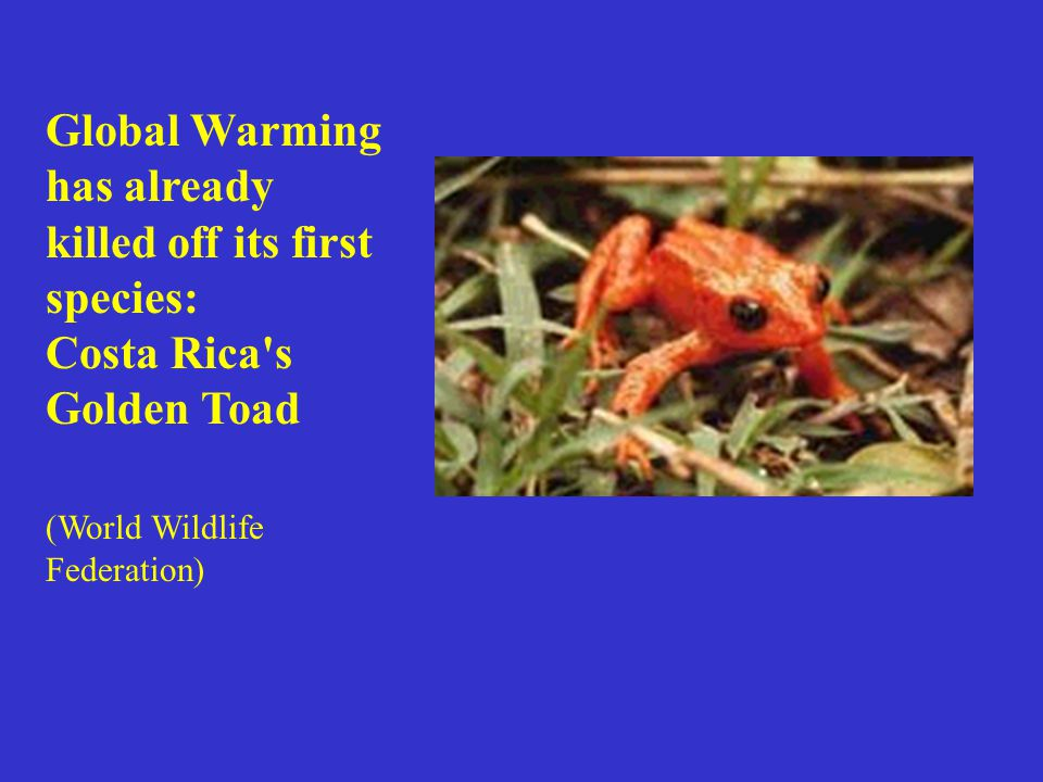 Global Warming has already killed off its first species: Costa Rica s Golden Toad (World Wildlife Federation)