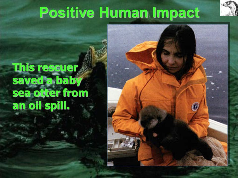 The Effects of the Exxon Valdez Oil Spill on Alaskan Wildlife Exxon Valdez Oil Spill Cleanup efforts