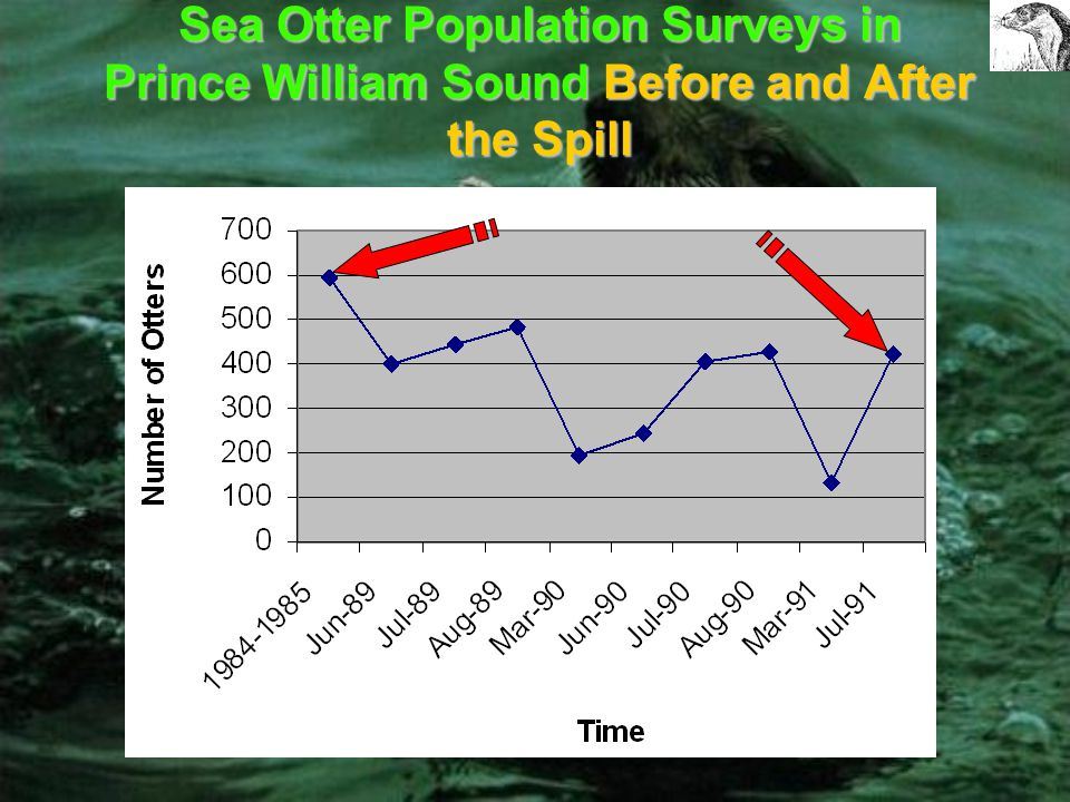 Interpreting the Data The spill was responsible for the death of a large number of sea otters. It is estimated that only 20% of the otters that died i