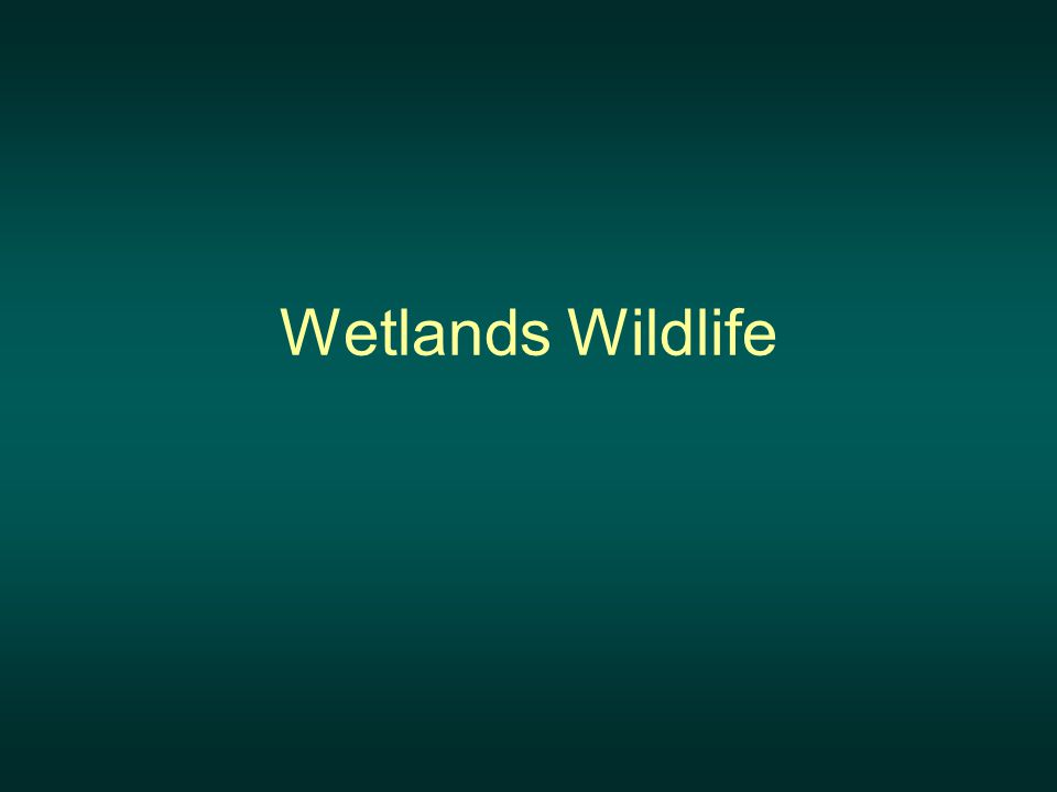 Wetlands Wildlife